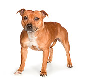 DOG 02 RK0460 01