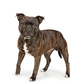 DOG 02 RK0461 01