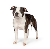 DOG 02 RK0465 01