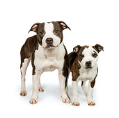 DOG 02 RK0467 01