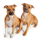 DOG 02 RK0469 01