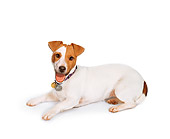 DOG 02 RK0471 01