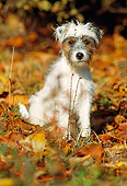 DOG 02 SS0001 01