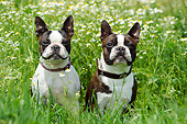 DOG 02 SS0005 01