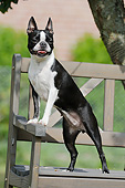 DOG 02 SS0006 01