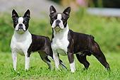 DOG 02 SS0008 01