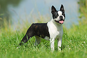 DOG 02 SS0009 01