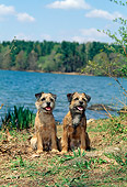 DOG 02 CE0001 01