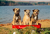 DOG 02 CE0002 01