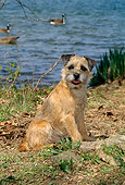 DOG 02 CE0003 01