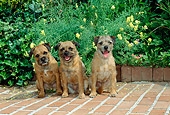 DOG 02 CE0005 01