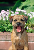 DOG 02 CE0006 01