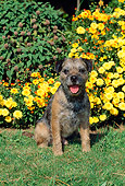 DOG 02 CE0009 01