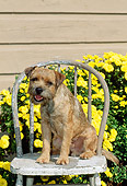 DOG 02 CE0010 01