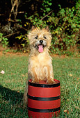 DOG 02 CE0014 01