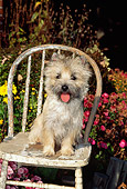 DOG 02 CE0016 01
