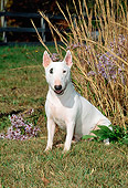 DOG 02 CE0018 01