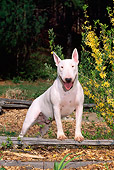 DOG 02 CE0020 01