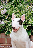 DOG 02 CE0024 01