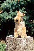 DOG 02 CE0027 01