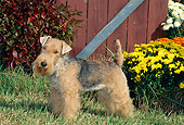 DOG 02 CE0028 01