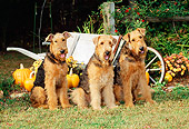 DOG 02 CE0029 01