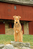 DOG 02 CE0033 01