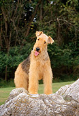 DOG 02 CE0034 01