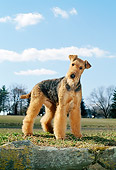 DOG 02 CE0035 01