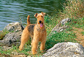 DOG 02 CE0036 01