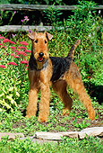 DOG 02 CE0037 01