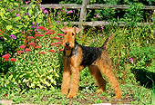 DOG 02 CE0038 01