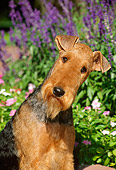 DOG 02 CE0040 01