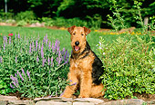 DOG 02 CE0042 01