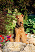 DOG 02 CE0043 01