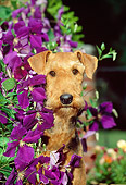 DOG 02 CE0044 01