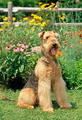 DOG 02 CE0045 01