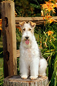 DOG 02 CE0057 01