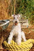 DOG 02 CE0058 01