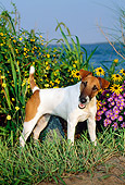 DOG 02 CE0061 01