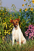 DOG 02 CE0062 01