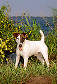DOG 02 CE0063 01