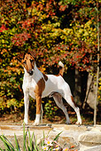 DOG 02 CE0064 01