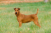 DOG 02 CE0065 01