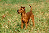 DOG 02 CE0066 01