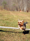 DOG 02 CE0068 01
