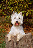DOG 02 CE0070 01