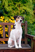 DOG 02 CE0079 01