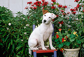 DOG 02 CE0080 01
