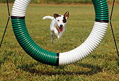 DOG 02 CE0082 01